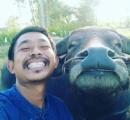 【タイ】ほほ笑む水牛の写真がネットで拡散「かわいい」と大人気