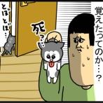 子猫が小屋に文句言うから部屋に閉じ込めたら・・・