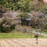 『我が家の桜』の画像