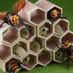 リアルサイズの「スズメバチ」とその幼虫と巣がフィギュアになってガチャに登場!