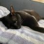 PECO更新のお知らせ/カタギじゃない猫の顔