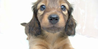 可愛い犬でコメント蘭の表示についてのテストです。CSSの適用範囲について確認します。