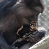 『お母さん猿の愛』の画像