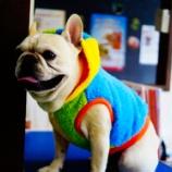『フレブル界1の色男!ボビーくん! Petit Cochonのお洋服を着てナイススマイル!』の画像