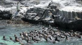 名前募集中の脱走ペンギン、群れに馴染めずぼっちに
