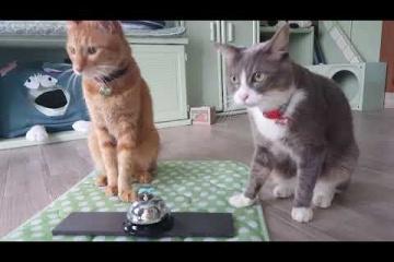 ベルを鳴らして餌をもらう猫