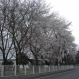 『3月の東大和⑤』の画像