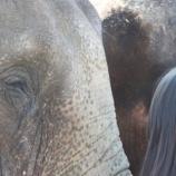 『ゾウの母仔感動の再開』の画像