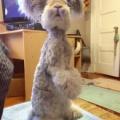 ちょっと変わったウサギがキュートすぎる!!
