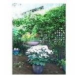 『我が家の庭はこれから秋まで花盛り、あじさい、ジャスミン・・・』の画像