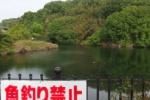 どことなく山奥のひっそりした池のイメージな『久保池』はコモンシティのところにある!~インサイト交野No.115~