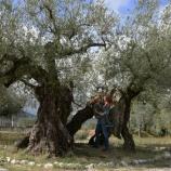『ウンブリアの大地の恵み!美味しいオリーブオイルと絶品豆料理』の画像