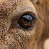 『動物の価格と日本の動物園の行方』の画像