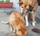 【画像】犬の「チャチャ」と猫の「プー」、軒下の犬小屋で仲良く添い寝