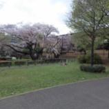 『4月初旬の東大和南公園Ⅰ』の画像