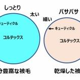 『光マイクロバブルとマイクロバブルフォーム(3550回記念)(19)』の画像