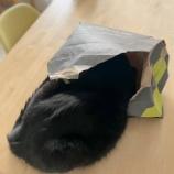 『きょうのいちまい・届いた袋が』の画像