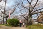 桜の名所!『星田妙見宮の桜並木』に視察に行ってみた!~今週が見頃のピークになるみたい~