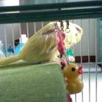 柚子蘭譚公式blog鸚哥鸚鵡の秘密基地