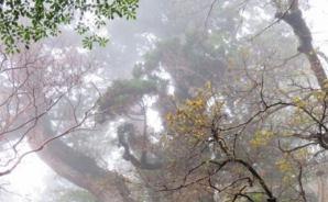祇園からお江戸にノボル (山行&温泉 備忘録)