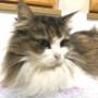 猫の病気は目の表情で早期発見