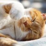 なぁ、家に帰ってきたら知らない猫がエアコンに挟まってるんだが......?????