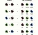 【画像】茶色い目の両親から青目の子供が産まれる確率wwwwwwwwwwwwwwwwwwwwwwwwwwwwww