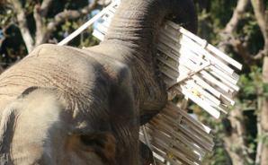 鼻で持ち上げた竹皿をどうする?