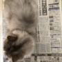 猫のこの表情、どう解釈するのが正解??