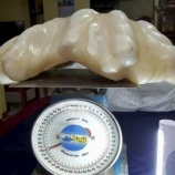 『世界一の真珠』の画像