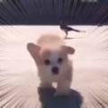 子イヌが「とことこ」走ってきた。ライドオン♪ → 鳥はこうした…