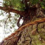 『杉の木の贈り物「懐中電灯と桜餅」』の画像