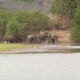 『行った気になる世界遺産 セルース猟獣保護区』の画像