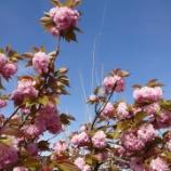 『春の風は思い出を呼び起こす』の画像