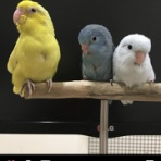 無類の鳥好きのブログ