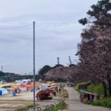 『夜桜ライトアップがはじまります』の画像