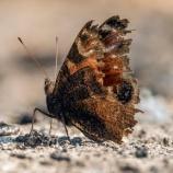 『英国で蝶が記録的に減少』の画像