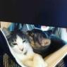 シュトレンと猫