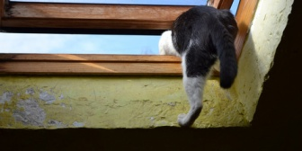 2ヶ月前に飼い猫を亡くし意気消沈していた時に、うちにほかの飼い猫が迷い込んできた