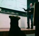 【画像】大学で勉強するイヌが発見される