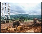 【その④】ピンナワラの象の孤児院に行く事にしたよinスリランカ