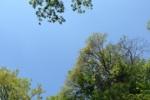 新緑の季節!里山遊びの際には虫よけ対策を!刺してくる虫、急増中!