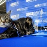 『枠を外すこと:英雄犬賞を獲得した猫』の画像
