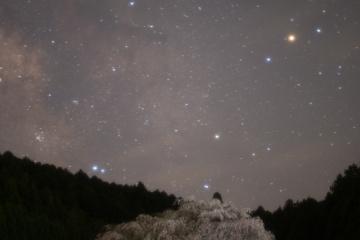 夜の又兵衛桜【2014】