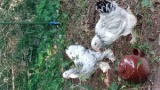 ワイの飼っとる鶏見てくれや(※画像あり)