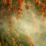 『知ってますかぁ?!花粉症対策の髪型があるコト!!』の画像