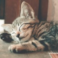 自分のいびきを聞いたことある?お勧め睡眠アプリ
