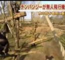 チンパンジー 枝を使って無人機を撃墜