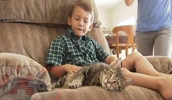 【動画】猫が猛犬に体当たり、飼い主の子ども救う
