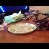 十条猫動画スタート!子猫のはな VS ゾイド その1の写真